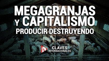 [Claves] Megagranjas y capitalismo: producir destruyendo