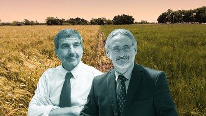 El Gobierno aprobó el trigo transgénico HB4 de Bioceres para consumo humano: qué riesgos hay