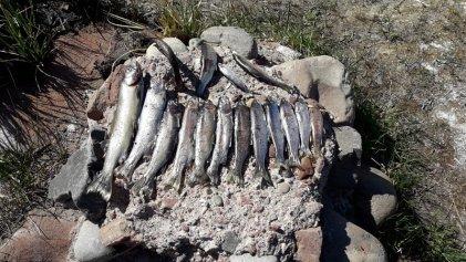 Vecinos denuncian una grave contaminación en el Río Diamante