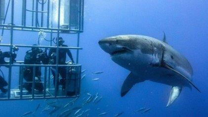 Tiburones: dime qué comes y te diré qué zonas proteger